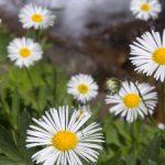 Oakshade - Gardening FAQ